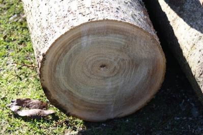 madera5